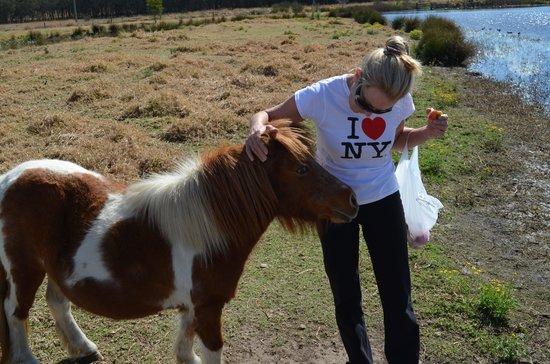 Broken View Estate: the friendly Shetland pony