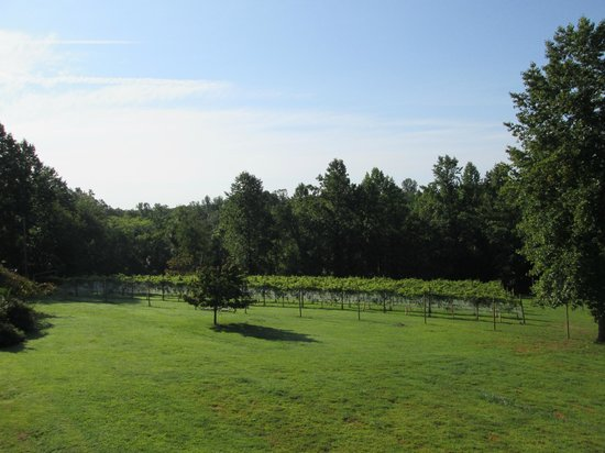 Arcady Vineyard Bed & Breakfast: From our balcony