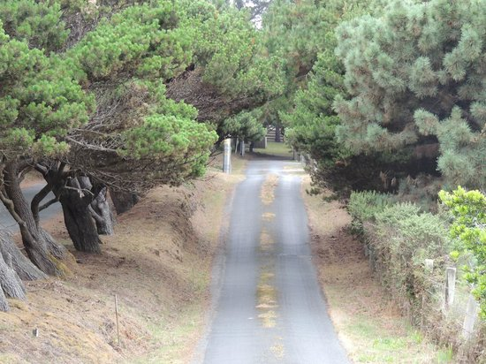 Cypress Cove at Mendocino: View of the private road leading back to Cypress Cove.
