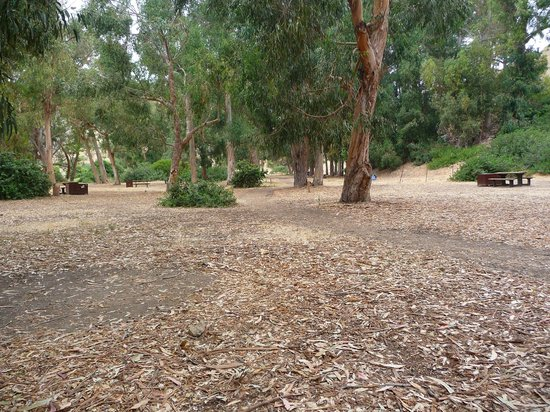Scorpion Ranch Campground: Lower loop campground