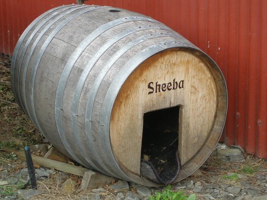 Queenstown Wine Trail: In the dog house Gibbston Wines