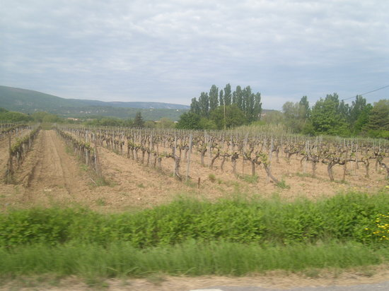 Chateau la Canorgue : vineyards everywhere !