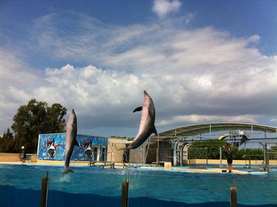 อโควโปลิส: El delfinario tiene dos shows al día.  Un poco sosos