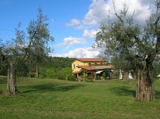 Locanda del Galluzzo : Il galluzzo