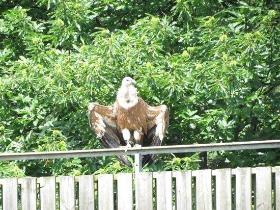 Parc Animalier de Courzieu : rapace 2