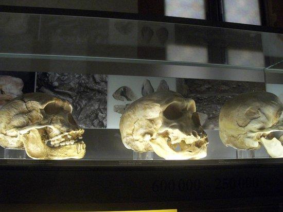Musée de la Préhistoire: Salle de la préhistoire