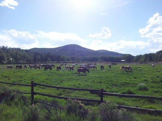 Bar Lazy J Guest Ranch: Les chevaux du ranch