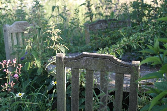 Hopton House Bed and Breakfast : Amongst the wildflowers in the grounds