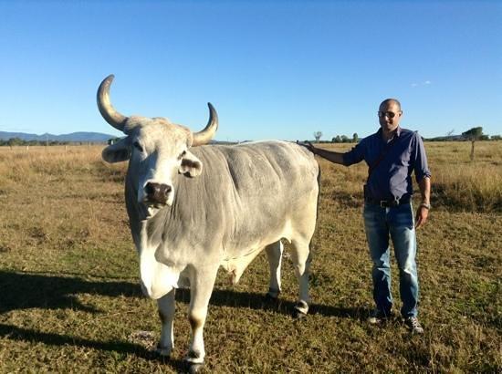 Henderson Park Farm Retreat: mio marito con uno dei tori dell'azienda