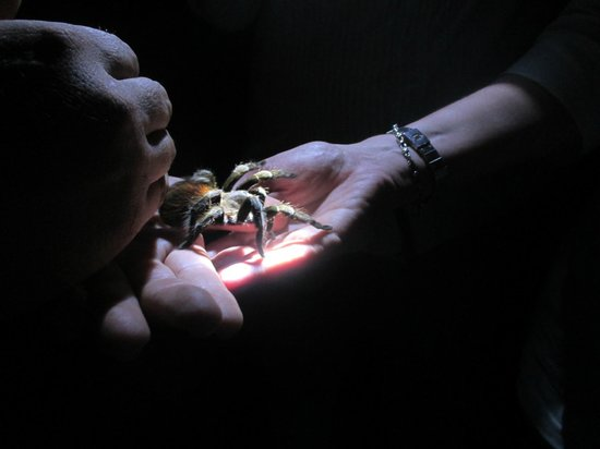 La Milpa Field Station: Tarantula hunting at LaMilpa