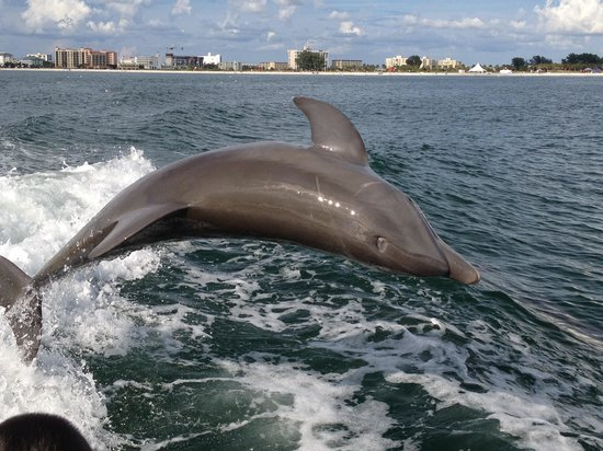 Pier House 60 Marina Hotel: Our dolphin sighting on little toot