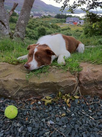 Muldoanich Bed & Breakfast : Rory the friendly dog just waiting for someone to throw the ball