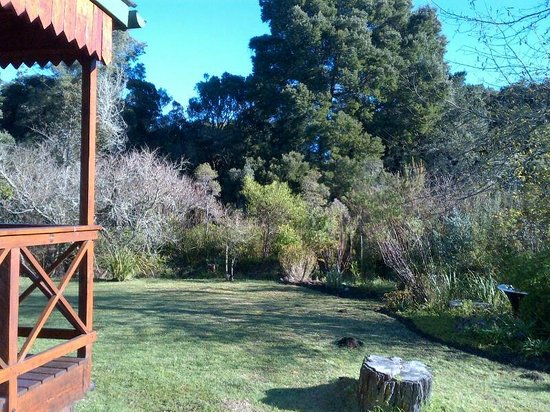 Forest Edge Nature-lovers' Retreat : View from next to Fieldmouse towards forest