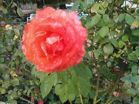 Madame Piemont: Le jardin de Mme Piemont