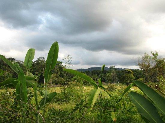 Hacienda La Isla Lodge: Uitzicht vanaf het terrein.