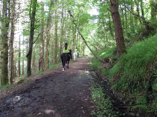 Blackwater Stables: Riding through the woods near the coast.