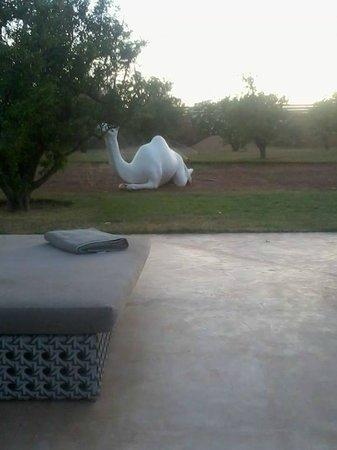 Fellah Hotel : décoration piscine