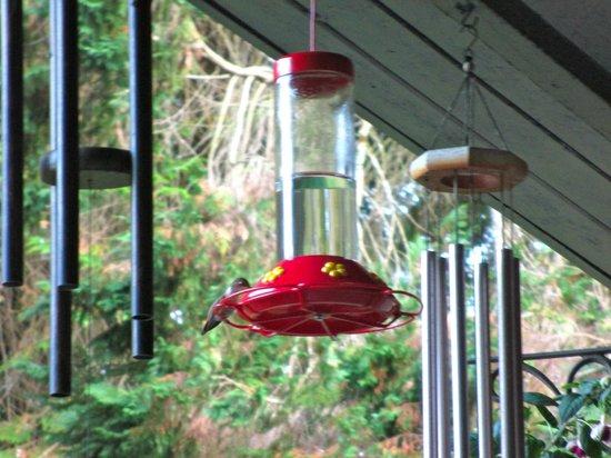 Sasquatch Crossing EcoLodge: One of many humingbird feeders....