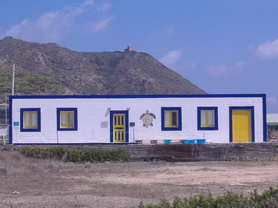 Centro Recupero Tartarughe Marine
