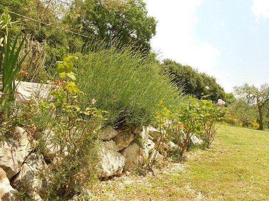 B&B La Casa Del Sole : La vegetazione del nostro giardino è ricca e rigogliosa