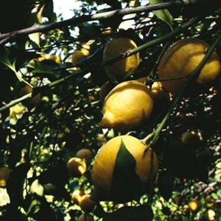Duomo Gelatieri dal 1952 : Ingredienti naturali, frutta di stagione e nessun conservante