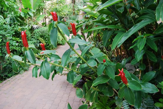Myriad Botanical Gardens: Flora
