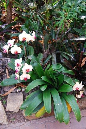 Myriad Botanical Gardens: Orchidee