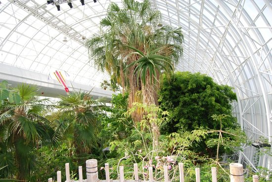 Myriad Botanical Gardens: Interno Crystal Bridge