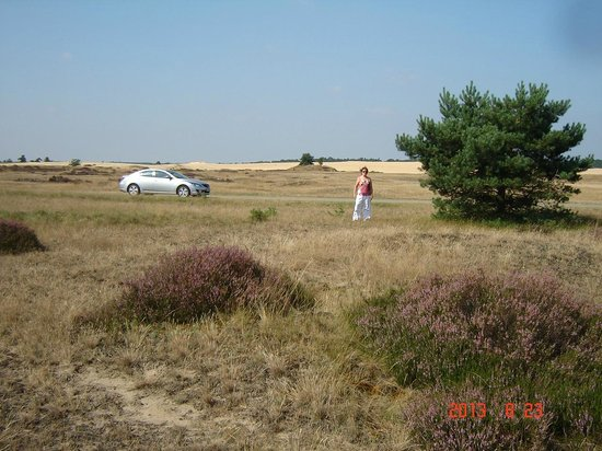 Ampt van Nijkerk : Verkenning van domein DE HOGE VELUWE