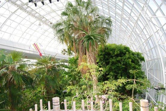 Myriad Botanical Gardens: Interno Crystal Bridge