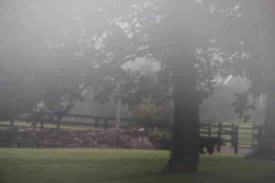 Glen Gordon Manor: lucky to see a baby black bear