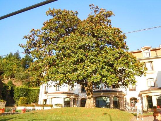 Gran Hotel Durango : Magnolia
