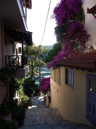 Nina Pansion: Nina's bougainvillea alley, on right