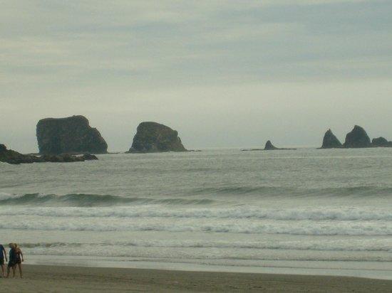 Rosemary Colandrea: Needles at First Beach in LaPush