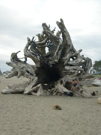 Rosemary Colandrea: Spider looking tree on first beach