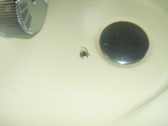 Pivovar Groll: Spiders in the bathtub