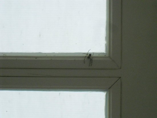 Pivovar Groll: Spiders on the window