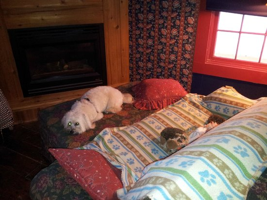 Log Cabin Guest House: inside the cabin...teddy's blanket covers the nice couch