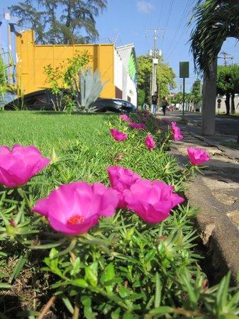 Hotel Europeo: Jardines