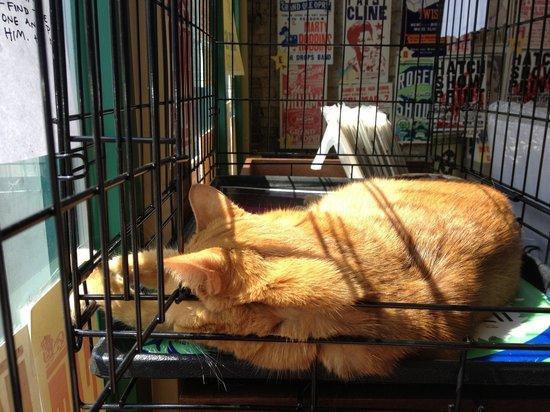 Hatch Show Print: Sweet girl sleeping in the sun- nice job!