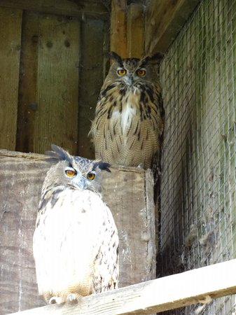 Bowland Wild Boar Park: Owls