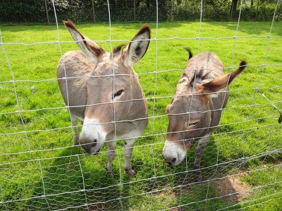Bowland Wild Boar Park: Donkeys