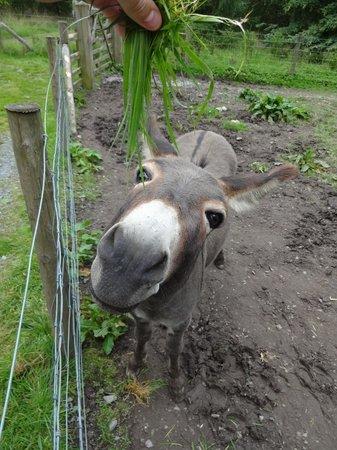 Bowland Wild Boar Park: Donkey