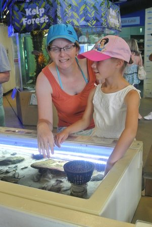Santa Monica Pier Aquarium: Hands on exhibits