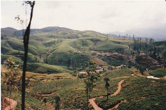 Hotel Hemadan : close to ratnapura.  tea fields