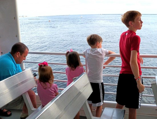 Southern Star Dolphin Cruise : Watching the dolphins.