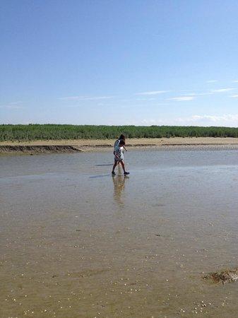 Baie de Somme (Somme Bay) : Uno scorcio della parte sabbiosa dell'estuario