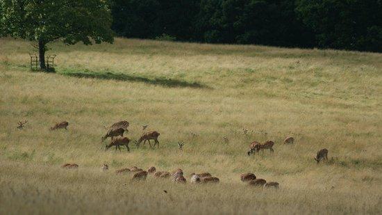 Brompton Lakes: Deer