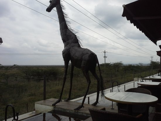 Ole Sereni: giraffe on the terrace