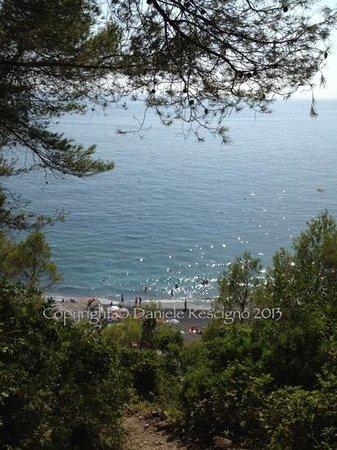 Punta Corvo: vista dall'alto: tra le frasche nel sentiero del bosco...